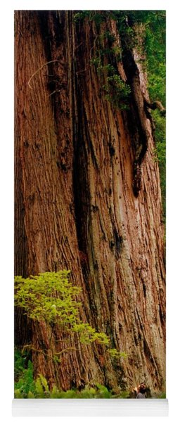 Kevin And The Big Tree - Redwood National Forest Yoga Mat