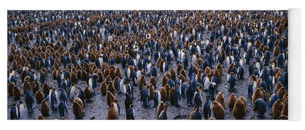 King Penguin Colony Salisbury Plain Yoga Mat
