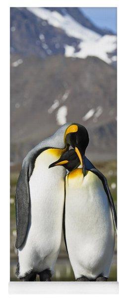 King Penguins Courting St Andrews Bay Yoga Mat