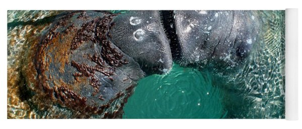 Kissing Manatees Near Harbour Island Yoga Mat