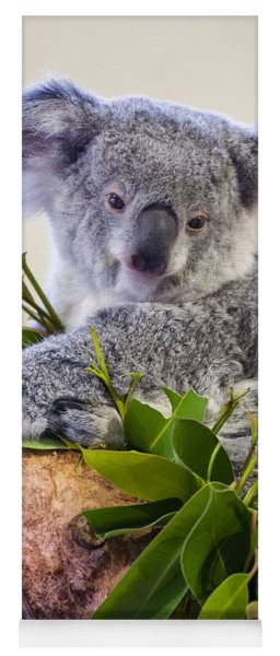 Koala On Top Of A Tree Yoga Mat