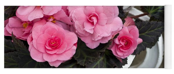 Last Of Summer  -  Begonias On Bench  Yoga Mat
