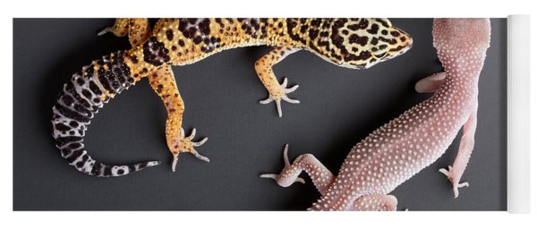 Leopard Gecko E. Macularius Collection Yoga Mat