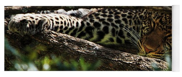 Leopard In A Tree Yoga Mat