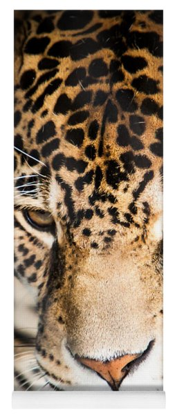 Yoga Mat featuring the photograph Leopard Resting by John Wadleigh
