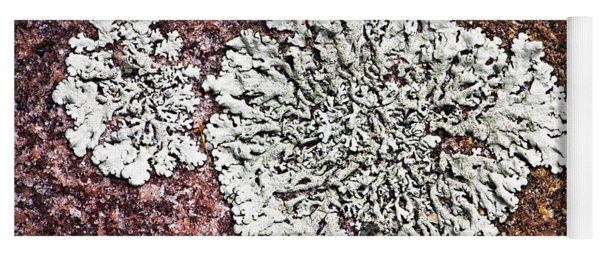 Lichen On Rock Yoga Mat