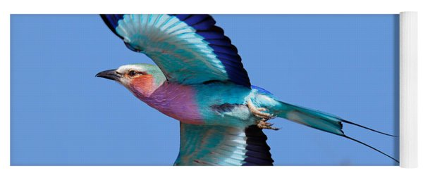 Lilac-breasted Roller In Flight Yoga Mat