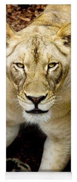 Lion-wildlife Yoga Mat