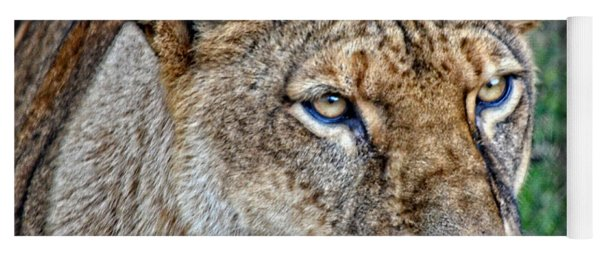 Lioness Deep In Thought Hdr Yoga Mat