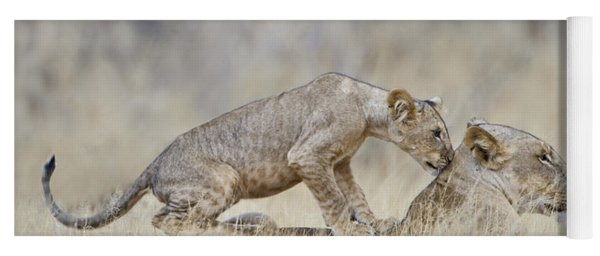 Lioness Panthera Leo With Its Cub, Kenya Yoga Mat
