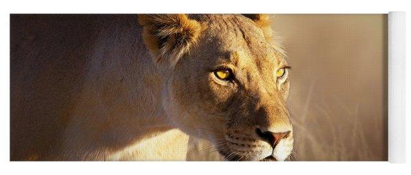 Lioness Portrait-1 Yoga Mat