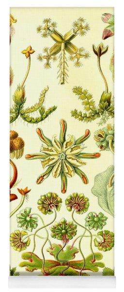 Liverworts Moss Brunnenlebermoos Haeckel Hepaticae Yoga Mat