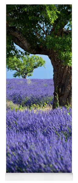 Yoga Mat featuring the photograph Lone Tree In Lavender by Brian Jannsen