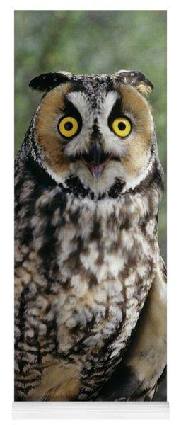 Long Eared Owl Asio Otis Europe, Asia Yoga Mat