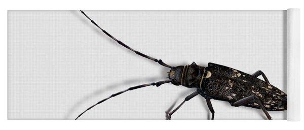 Long-hornded Wood Boring Beetle Monochamus Sartor - Coleoptere Monochame Tailleur - Yoga Mat
