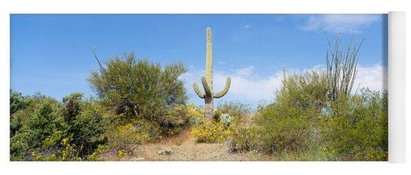 Low Angle View Of A Cactus Among Yoga Mat