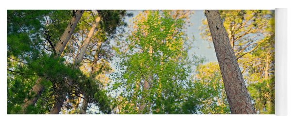 Low Angle View Of Red Pine Trees Yoga Mat
