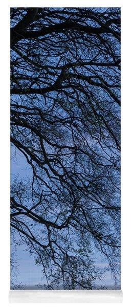 Low Angle View Of Tree At Dawn, Dark Yoga Mat