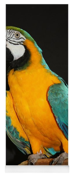 Macaw Hanging Out Yoga Mat