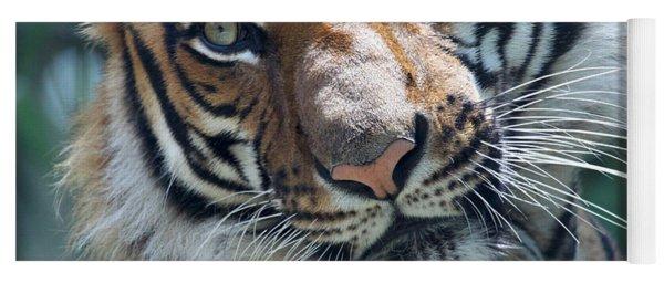 Malayan Tiger Yoga Mat
