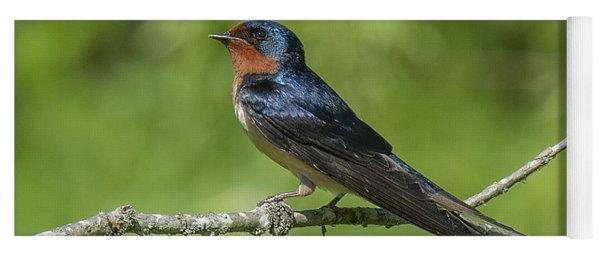 Male Barn Swallow Hirundo Rustica Dsb262 Yoga Mat