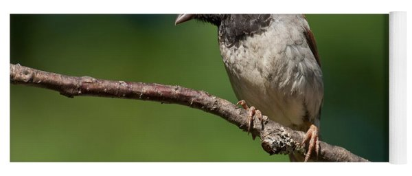 Male House Sparrow Perched In A Tree Yoga Mat