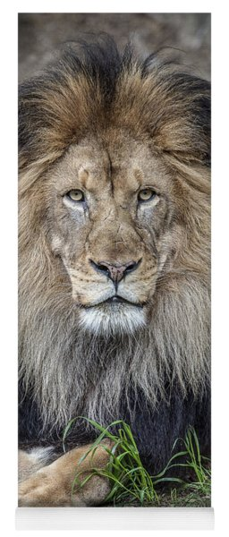 Male Lion Portrait Yoga Mat