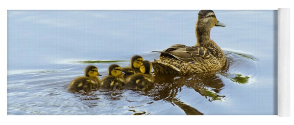 Mallard And Chicks  Yoga Mat