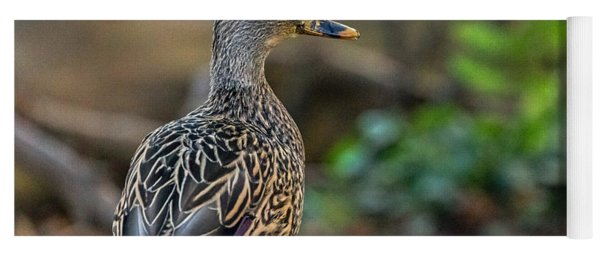 Mallard Hen Observing Yoga Mat
