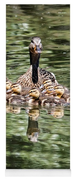 Mallard Hen With Ducklings And Reflection Yoga Mat