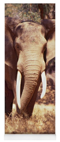 Mana Pools Elephant Yoga Mat