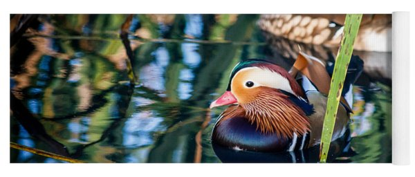 Mandarin Duck Reflections Yoga Mat