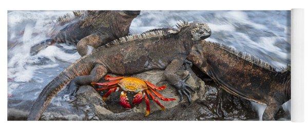 Marine Iguana Trio And Sally Lightfoot Yoga Mat
