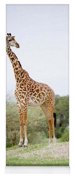 Masai Giraffe Giraffa Camelopardalis Yoga Mat