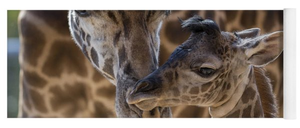 Masai Giraffe And Calf Yoga Mat