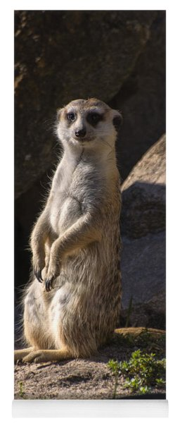 Meerkat Looking Forward Yoga Mat