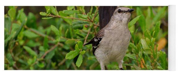 Mockingbird In Tree Yoga Mat