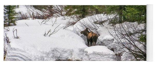 Moose In Alaska Yoga Mat