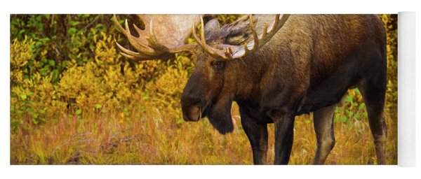 Moose In Glacial Kettle Pond  Yoga Mat