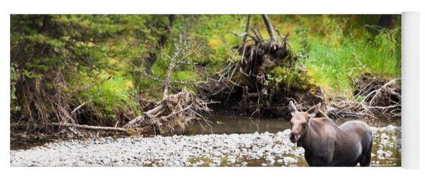 Moose In Yellowstone National Park   Yoga Mat