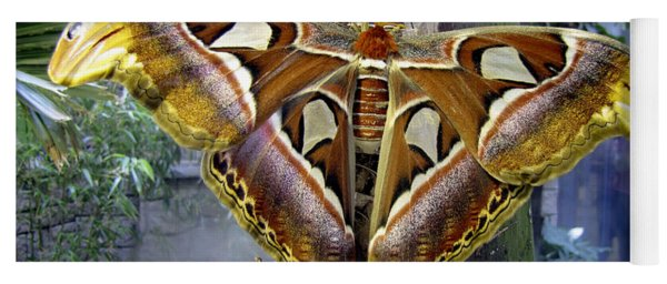 Atlas Moth Yoga Mat