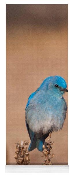 Yoga Mat featuring the photograph Mountain Bluebird by Cascade Colors