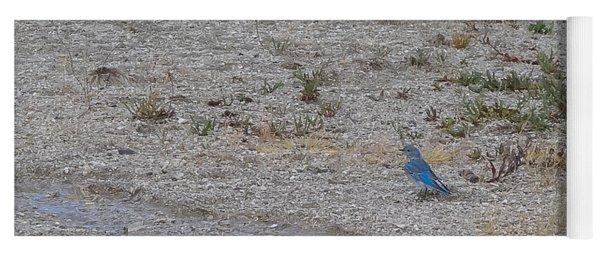 Mountain Bluebird  Yoga Mat
