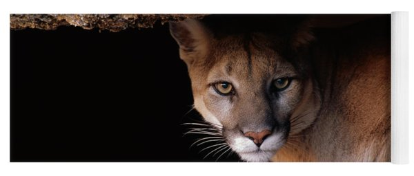 Mountain Lion Peering From Cave Yoga Mat