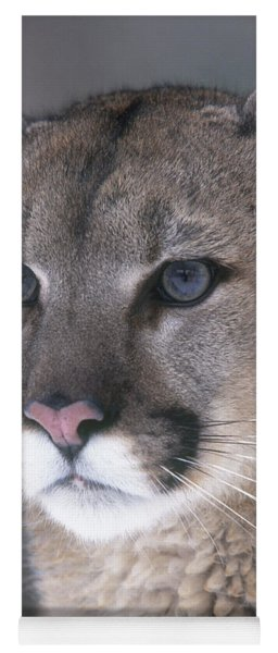 Mountain Lion Yoga Mat