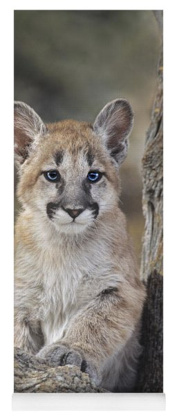 Yoga Mat featuring the photograph Mountain Lion Cub by Dave Welling