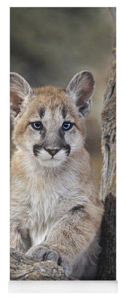 Mountain Lion Cub Yoga Mat