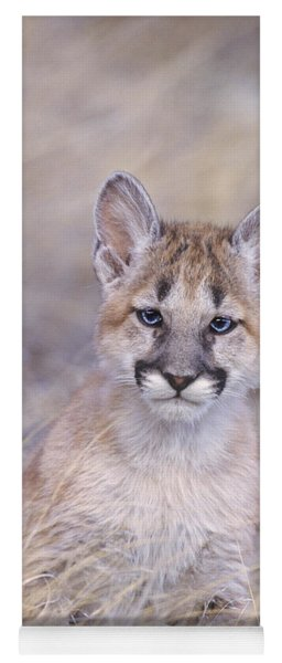 Yoga Mat featuring the photograph Mountain Lion Cub In Dry Grass by Dave Welling
