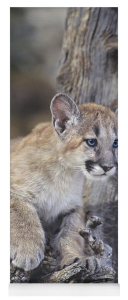 Yoga Mat featuring the photograph Mountain Lion Cub On Tree Branch by Dave Welling