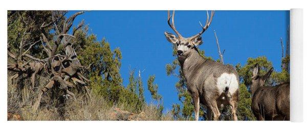 Mule Deer Buck Yoga Mat